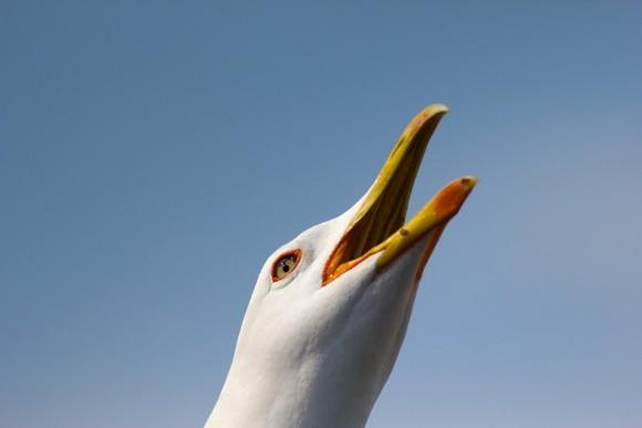Ornitologija otoka Krka